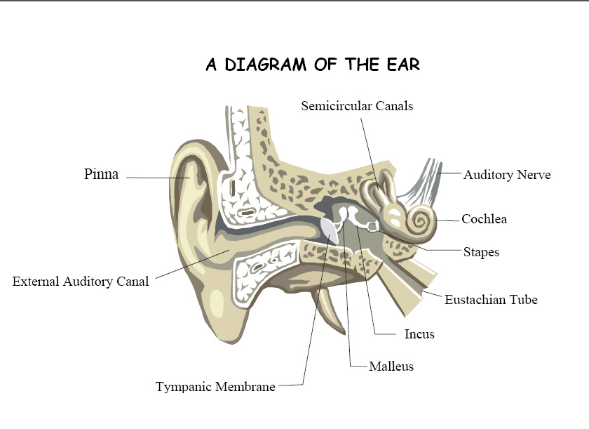 Ear clearing techniques diagram of the ear ccuart Gallery